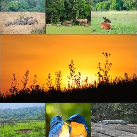Landscape and wildlife of Khao Yai national park, Thailand,  Stock Photo