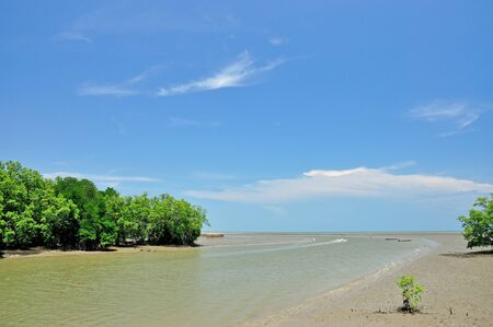 Landscape of Mangrove forest  photo