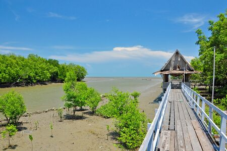 Mangrove forest and grunge wooden pavilion  photo