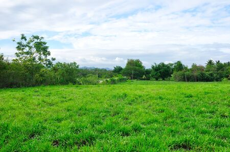 Grassland in countryside, Nature background Stock Photo - 13769201
