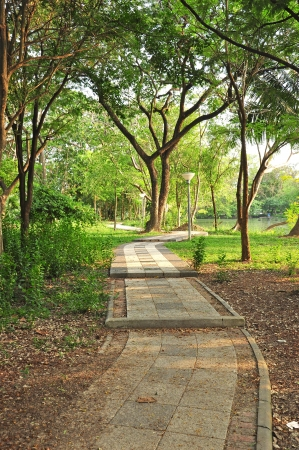 Pathway in Green Park, Silpakorn University, Thailand Stock Photo - 15145841