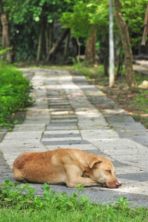 Thai dog sleeping on walkway in green park Stock Photo - 15150189