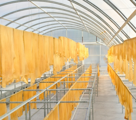 Rubber sheet in solar drying chamber Stock Photo - 16152262