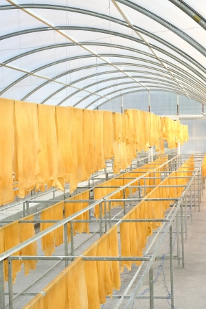 Rubber sheet in solar drying chamber