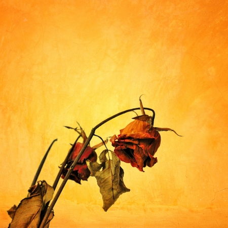 Dried rose in grunge style, Concept of Sad Valentine day photo