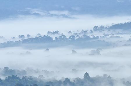 Morning fog in dense tropical rainforest at Khao Yai national park, Misty forest landscape photo