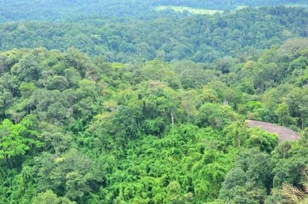 Forest landscape at Khao Yai national park, Thailand Stock Photo