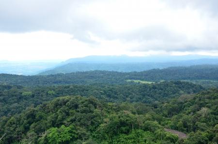 Forest landscape at Khao Yai national park, Thailand, World Heritage  Stock Photo