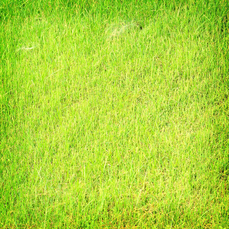 Grass texture for background  Stock Photo