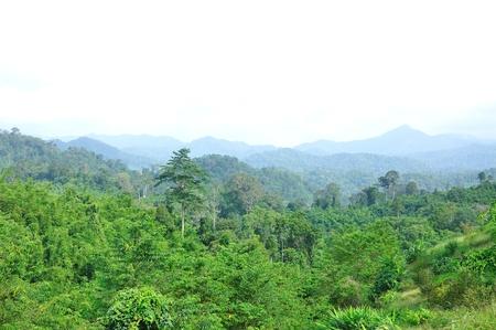 Forest landscape at Surat Thani, Thailand photo