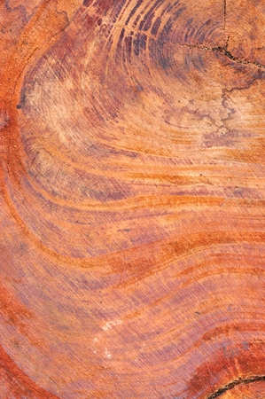 Texture of wood background, bark texture photo