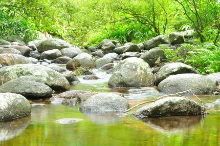 forest stream: Forest stream, Thailand