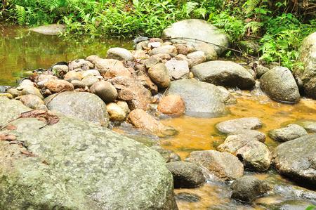 forest stream: a weir in forest stream, Thailand