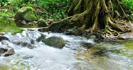 Forest stream, Tropical rainforest in Thailand