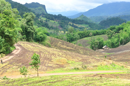 Landscape of agricultural field with mountain, Agriculture scene, Forest destruction, Thailand Stock Photo