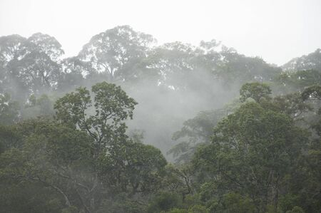 Misty forest landscape, Thailand