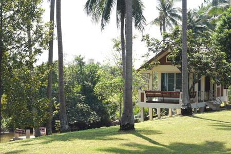 modern house in coconut garden