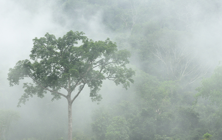 Morning fog in dense tropical rainforest at Bang lang National park , Misty forest landscape, Thailand Imagens - 85412996