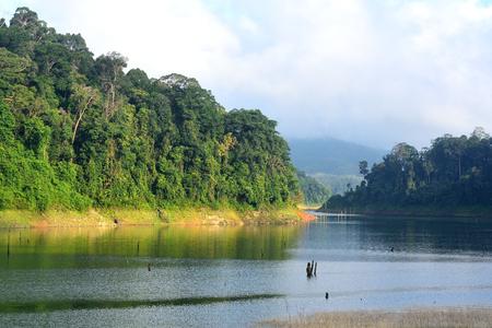 Forest landscape at Bang Lang National Park, Thailand