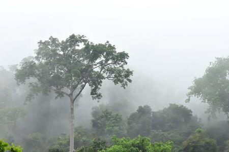 Morning fog in dense tropical rainforest at Bang lang National park , Misty forest landscape, Thailand Imagens - 86499270