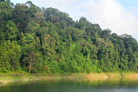 Forest landscape at Bang Lang National Park, Thailand Imagens - 86499271
