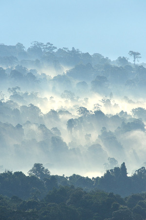 Morning fog in dense tropical rainforest at Khao Yai national park, Misty forest landscape