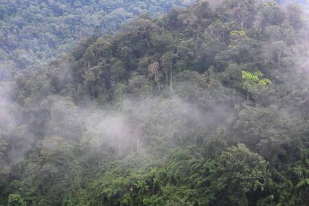 Landscape of dense tropical rainforest at Khao Yai national park, Forest landscape of Thailand
