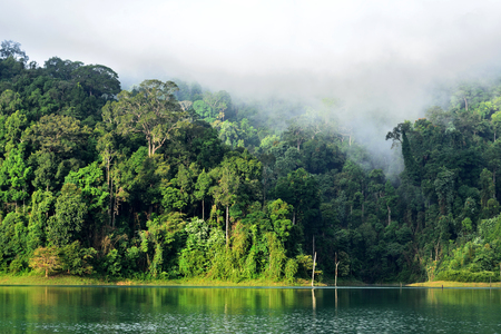 Landscape of dense tropical rainforest at Rajjaprabha Dam or Cheow Lan Dam (Guilin of Thailand), Forest landscape of Thailand