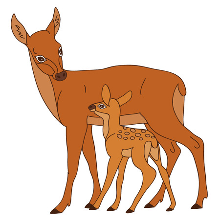 baby deer: Vector deer with small baby deer looking at each other Illustration