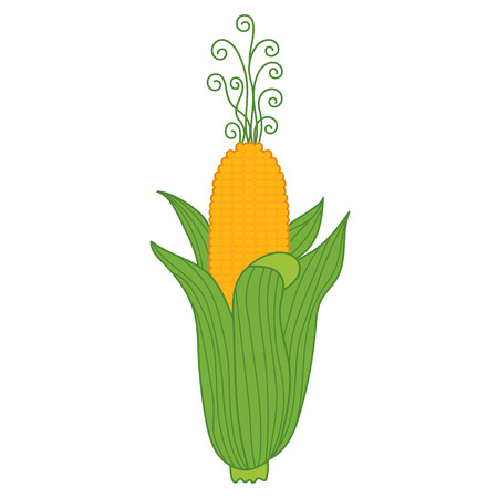 cob: Vector yellow corn with gold grains in green cob Illustration