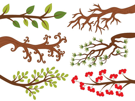 ash tree: tree branches with leaves, ash berries  pine needle