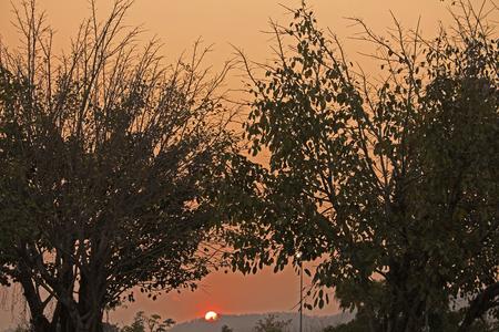 lateness: Sunset shade trees Stock Photo