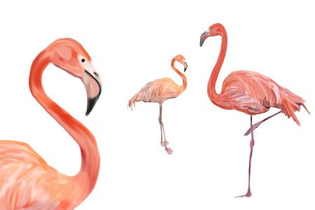 Three flamingos isolated different distances Stock Photo