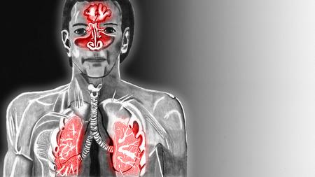 alveolos: Las vías respiratorias superiores en un formato frío de 16 a 9 copyspace derecho Foto de archivo