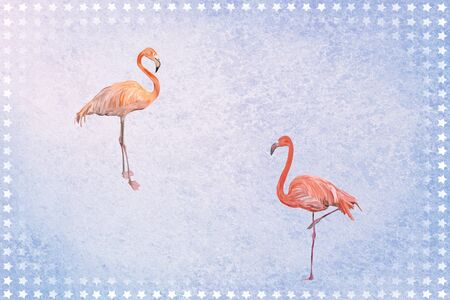 Flamingos in front of blue background with stars