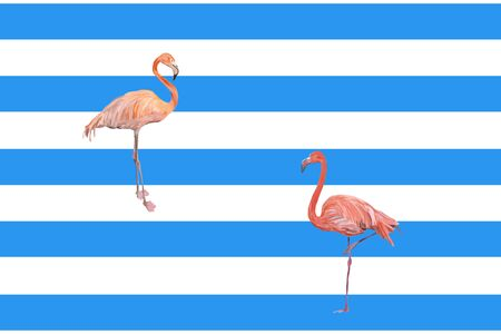 Flamingos maritime in front of blue stripes background Stock Photo