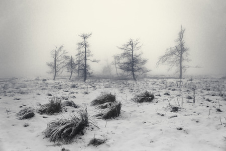 Winter fog landscape