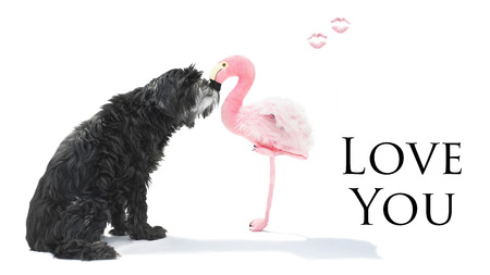 Black dog with long coat kisses flamingo kisses and text