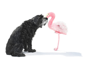 Black fuzzy dog ??kisses flamingo from plush Zdjęcie Seryjne