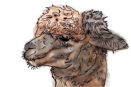 A side portrait of a Suri alpaca with crinkled coat hair. Illustration in the style of a watercolor drawing. Stock Photo