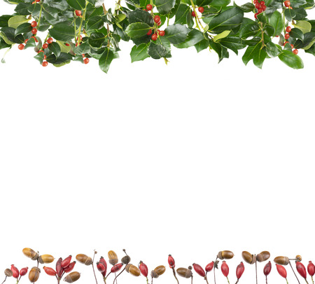 Christmas decoration of holly branches and holly berries (Ilex). The plant parts are isolated in front of white background. Rosehips and acorns form an edge.