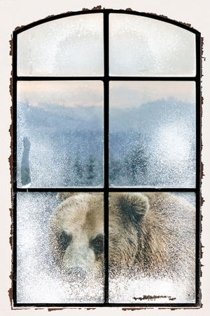 An old lattice window is snowy. The view is of a winter forest and a big brown bear looking into the room.