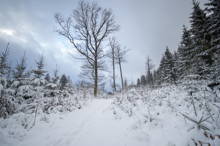 A snowy snow landscape. The sky is cloudy. Stock Photo