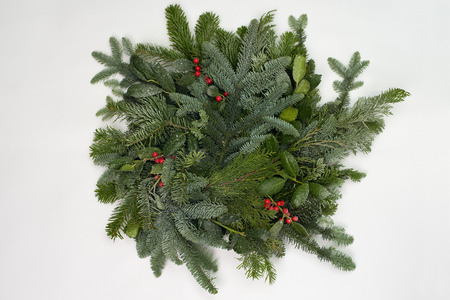A circle of branches of different fir varieties. Green and blue Nordmann fir branches, coniferous branches and holly (Ilex) lie on white paper background.