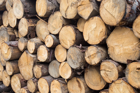 Logs of wood in a stack - Wood texture background