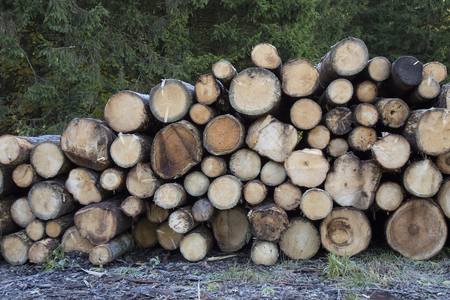 Logs of pine wood in stack - Wood texture background