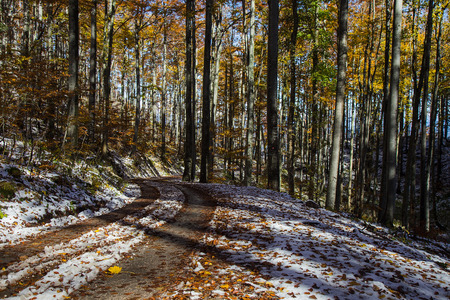 Forest Road in autumn colors with falling foliage and Snow