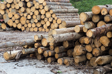 Stack of Logs sawn for transportation Stock Photo