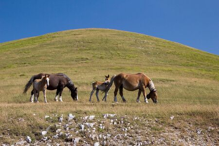 Foals and adult horses grazing in a meadow