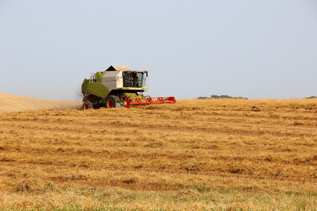 Harvesting Barley Field with Combine Harvester